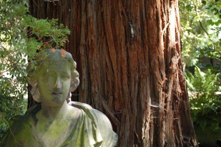Trompenburg Arboretum beeld bij een boom