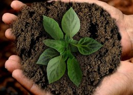 The picture shows two hands holding up a pile of earth with a small plant in the center.