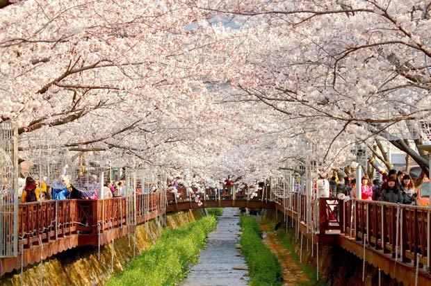musim bunga korea