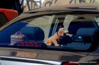 Traditionsbewusster Autofahrer: Klopapierhut und Wackeldackel