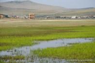 Sumpflandschaft hinter den Dünen