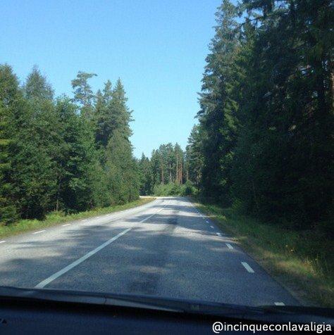 Safari con gli alci in Svezia