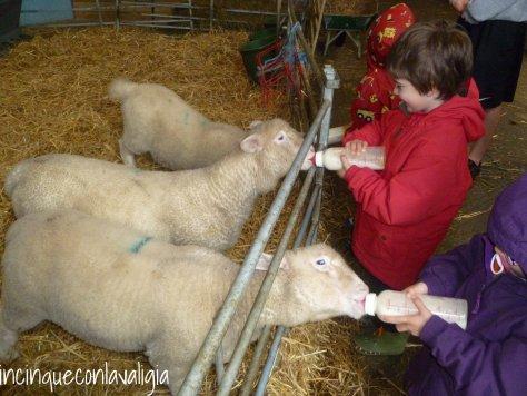 Vacanze in fattoria con bambini