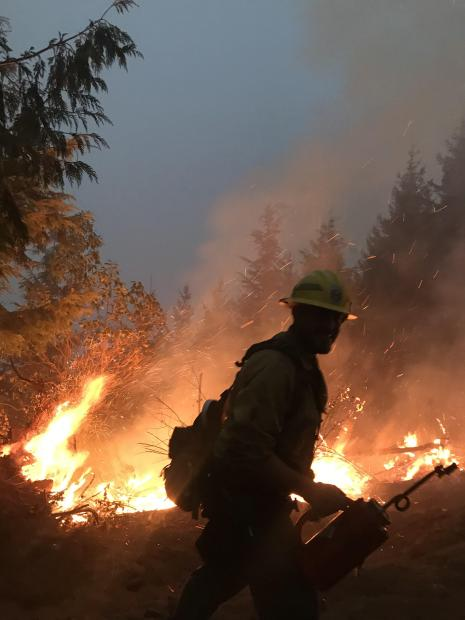 A firefighter watches the fire puposely set to burn out an area to reduce fuel the main fire could consumer.