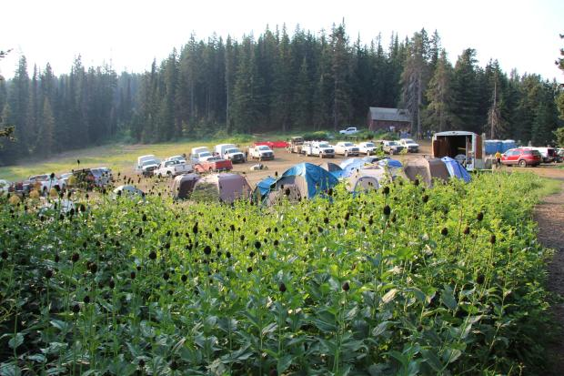 this photo shows the spike camp and staging area in a mountain meadow at Godman Guard Station