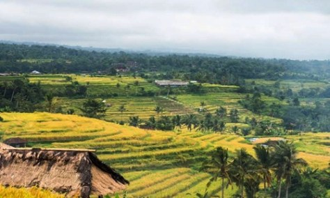 Jatiluwih Cycling Tour Package
