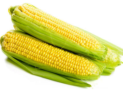Business: How to Cultivate Hybrid Maize in Nigeria