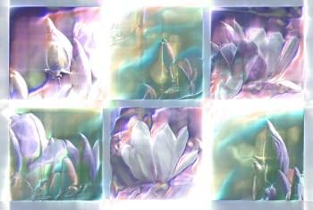 6 x magnolias