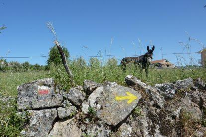 Seta nas pedras de caminho com burros do Caminho Interior de Santiago de Compostela em Vila Pouca de Aguiar