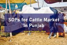 Photo of SOPs for cattle markets in Punjab