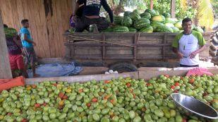 Visita à produção de agricultores vinculados à Cooprusan