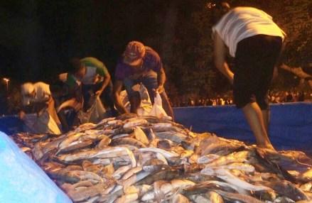 Pescado apreendido é distribuído à população