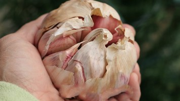 health benefits of garlic