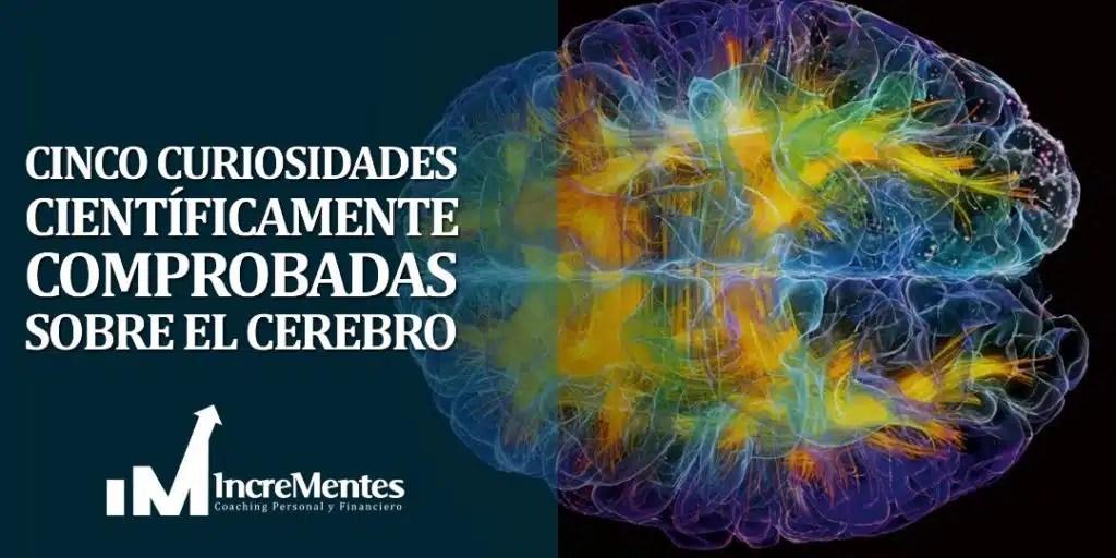 Cinco curiosidades científicamente comprobadas sobre el cerebro