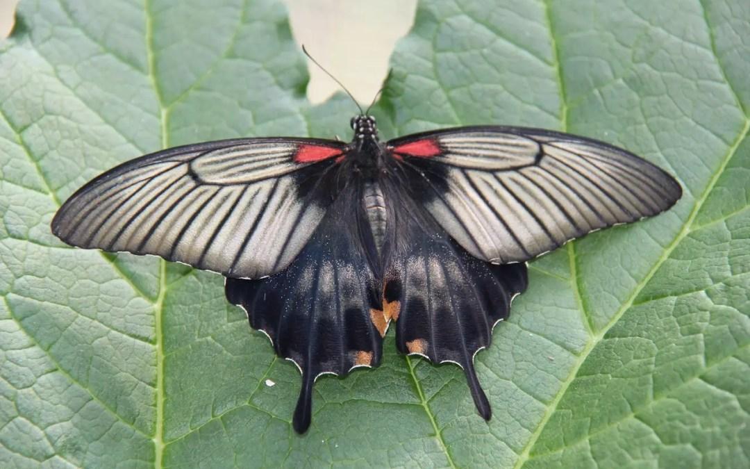 La ferme aux papillons et le jardin des découvertes à Die en Drôme