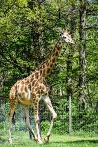 Safari Parc de Peaugres en Ardéche