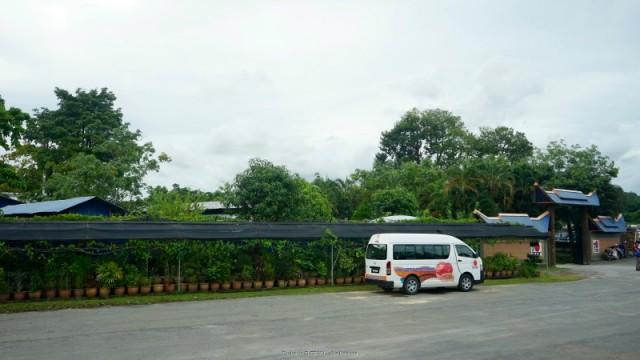 bazsalikom-malajzia-malaj gyogynovenyek2