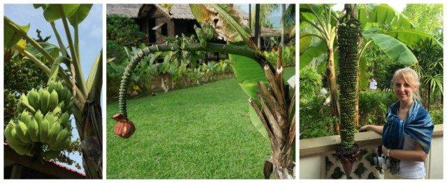 bananfa-langkawi-malajzia