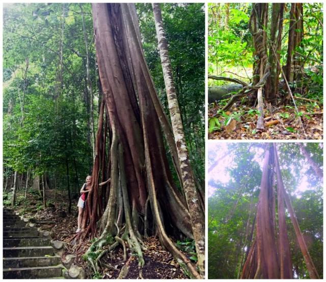 inda -jungle trek - langkawi - malajzia