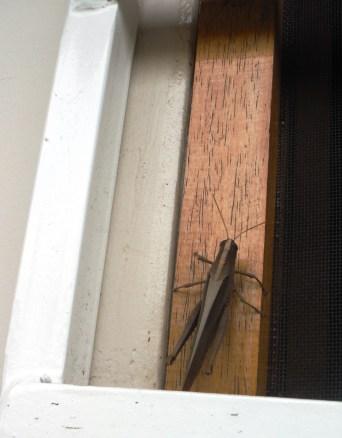 2 grasshopper