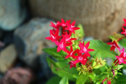 Pink Flower - Vibrant