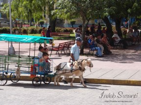 Activity in Parque Vidal