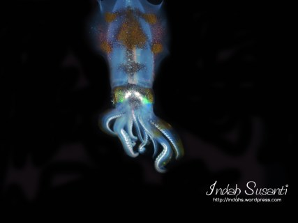 Cuttlefish/Sotong