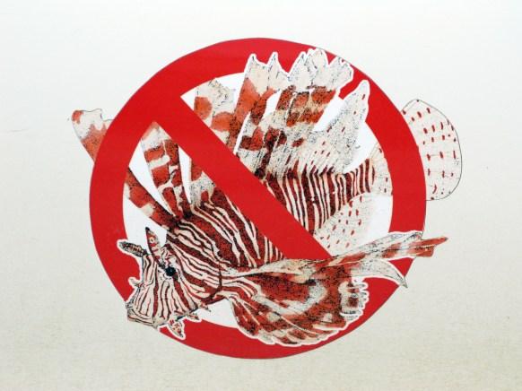 No Lionfish