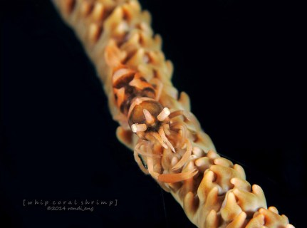 Third Place of Samber Gelap Underwater Photo Competition
