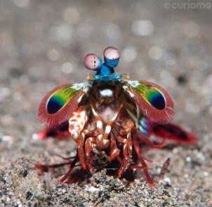 A Bug's Life by Calvin Tang