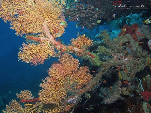 Indonesia Underwater Life