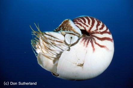 Don Sutherland - Nautilus