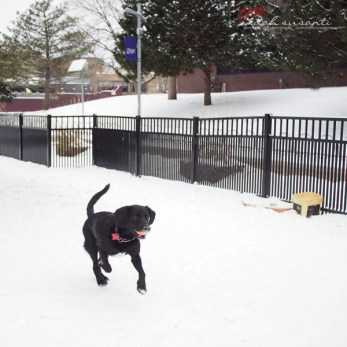 Dante and Snow in Minneapolis