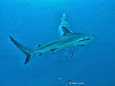 Five Endangered Marine Animals