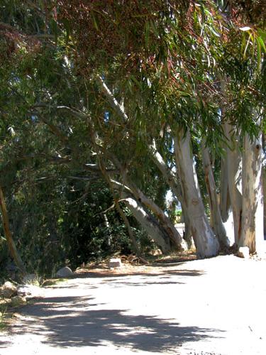Tree of congratulations