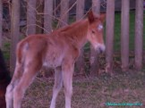 Wild foal Picture by Misha le Grange