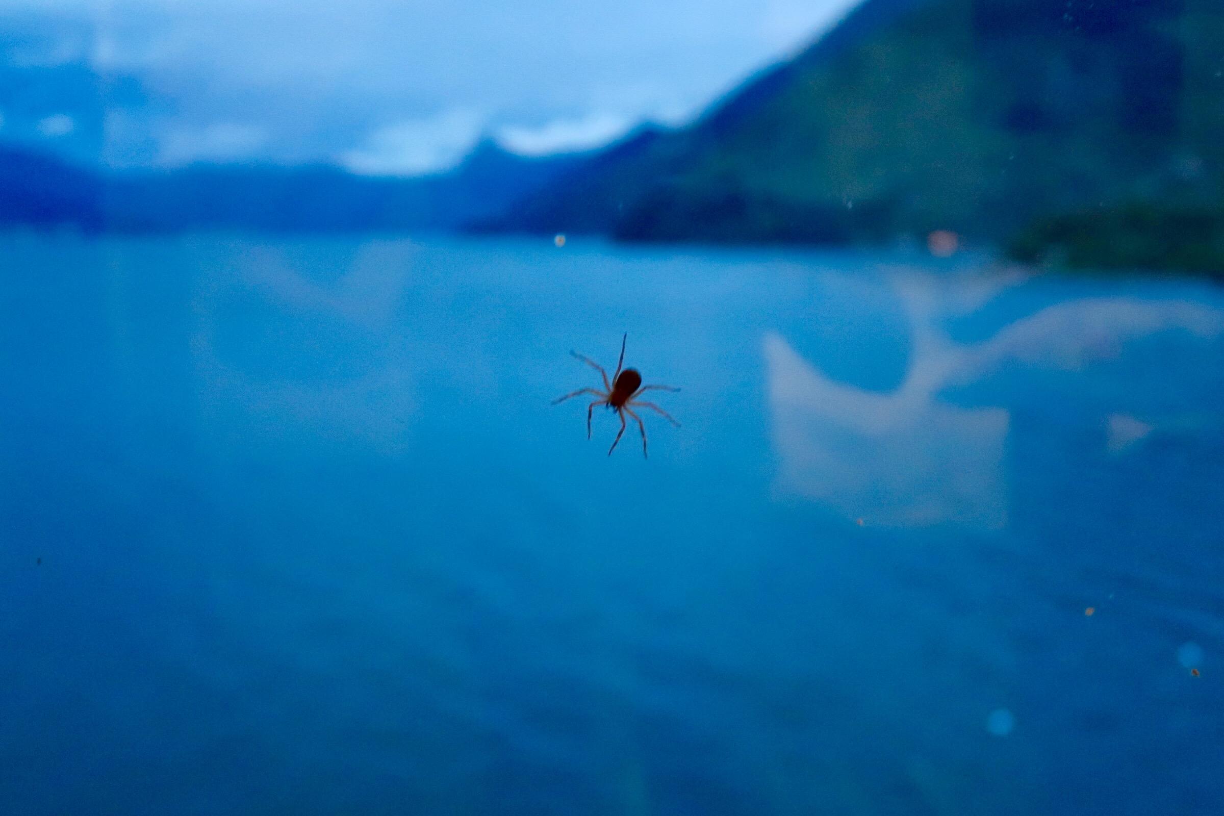 bugs guatemala