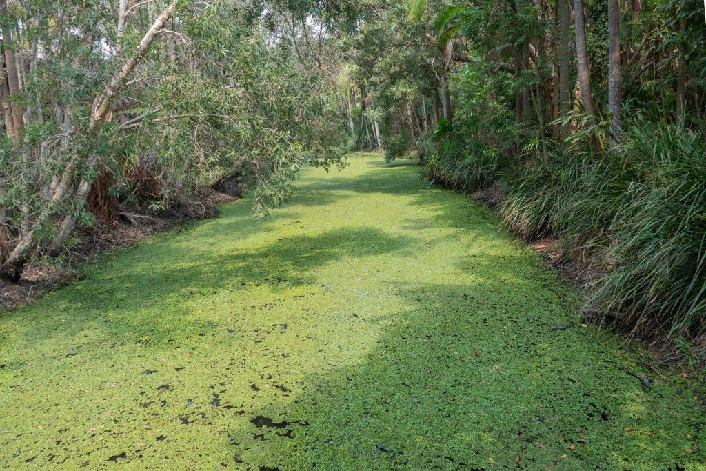 Byron Bay rain forest