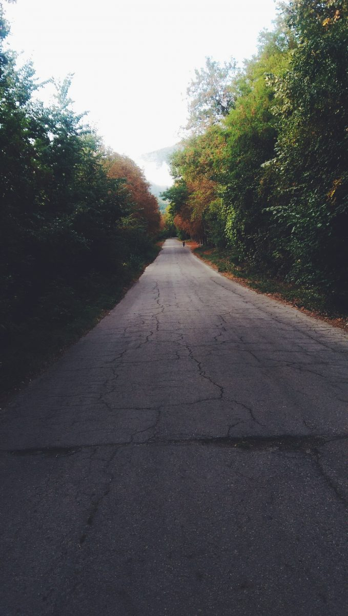 Cracked rural road with trees