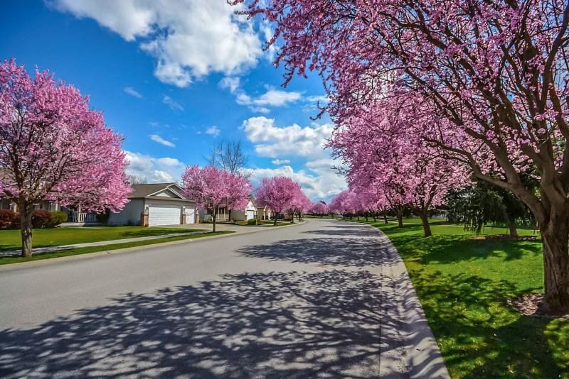 Tree line street suburban neighborhood