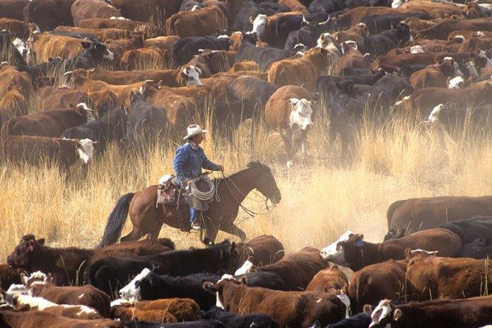 Bundy Ranch Land
