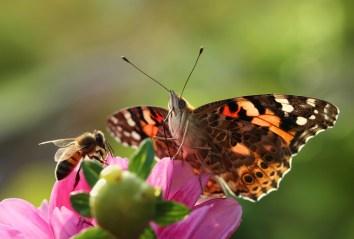 Save the Pollinators
