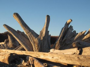 Driftwood on the beach by American Camp, San Juan Island
