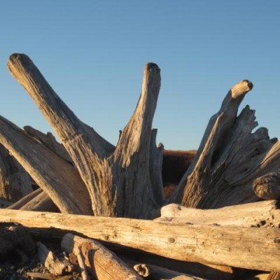 Driftwood on the beach by American Camp, San Juan Island