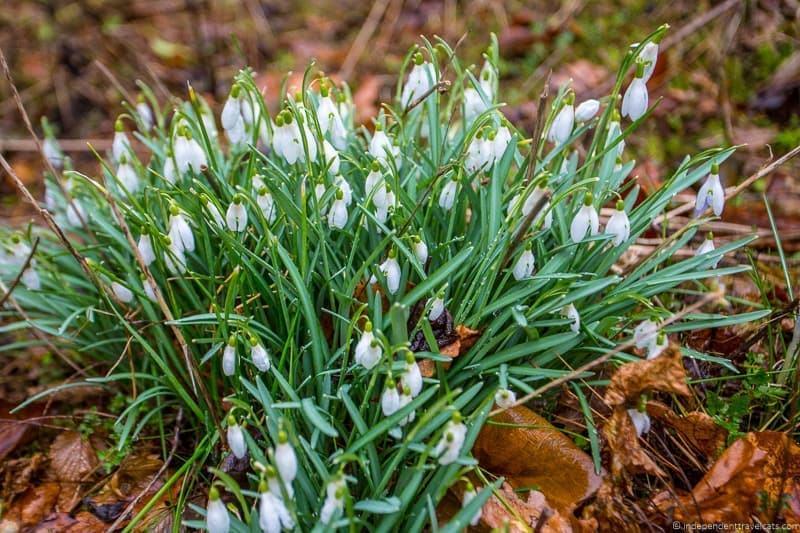 Cruickshank botanic garden things to do in Aberdeen Scotland travel guide