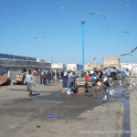 Independent travel help, Essaouira, Morocco, Port, Seagulls, Fish, Fishermen