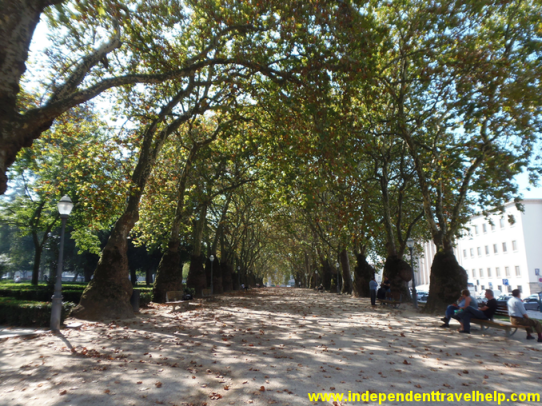 trees, park, porto, portugal, independent travel