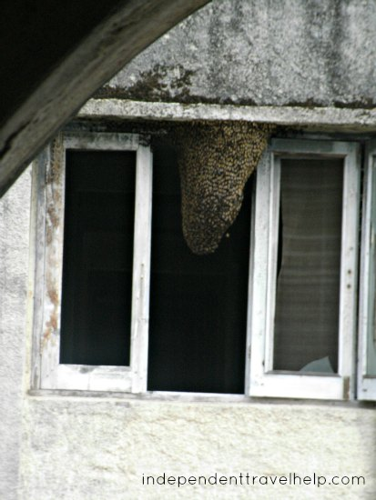 wasps, bees, window, ashram, rishikesh, india, The Beatles