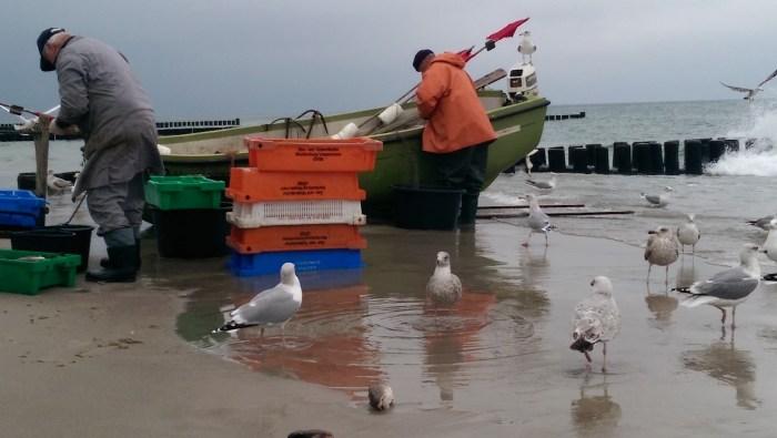 FischerAhrenhoop
