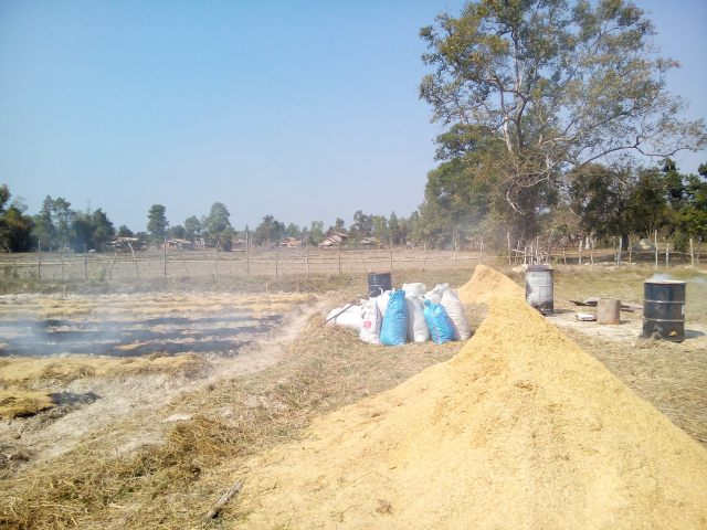 rice husk and manure